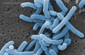 Mudança taxonômica dos Lactobacillus